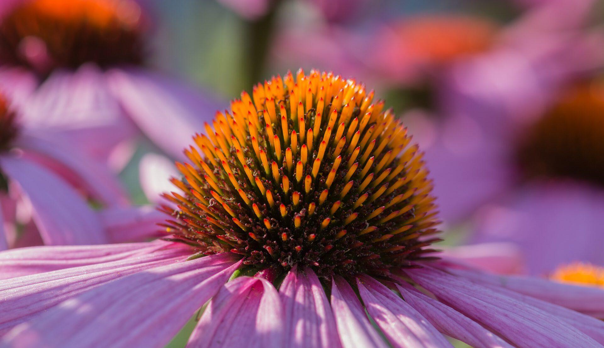 Welkom in de wonderlijke wereld van planten...