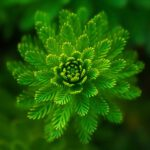 evolutie plantenrijk
